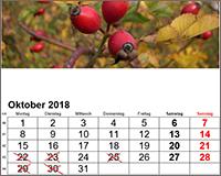 Studium und Beruf konkret - Herbstveranstaltungen