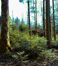 Ruhiges Waldgebiet