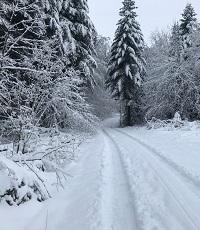 Waldstrasse verschneit