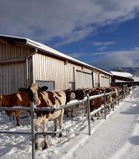 Tiere haben auch im Winter Auslauf.