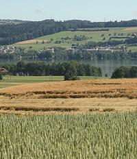 Landwirtschaftliche Kulturen am Sempachersee.