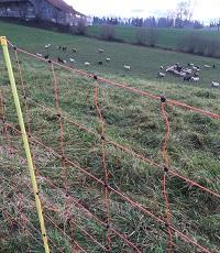Schafe sind mit einem Zaun geschützt.