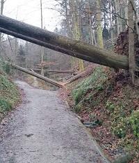 Sturmholz versperrt Waldstrasse