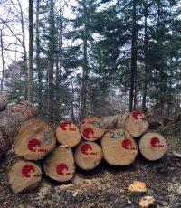 Holzspritzen