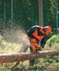 Sturmholz aufrüsten