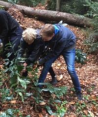 Jugendliche helfen beim Entfernen der Kirschlorbeer.