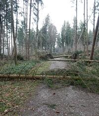 Umgestürzte Bäume auf einer Waldstrasse.