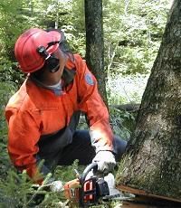 Sichere Waldarbeit