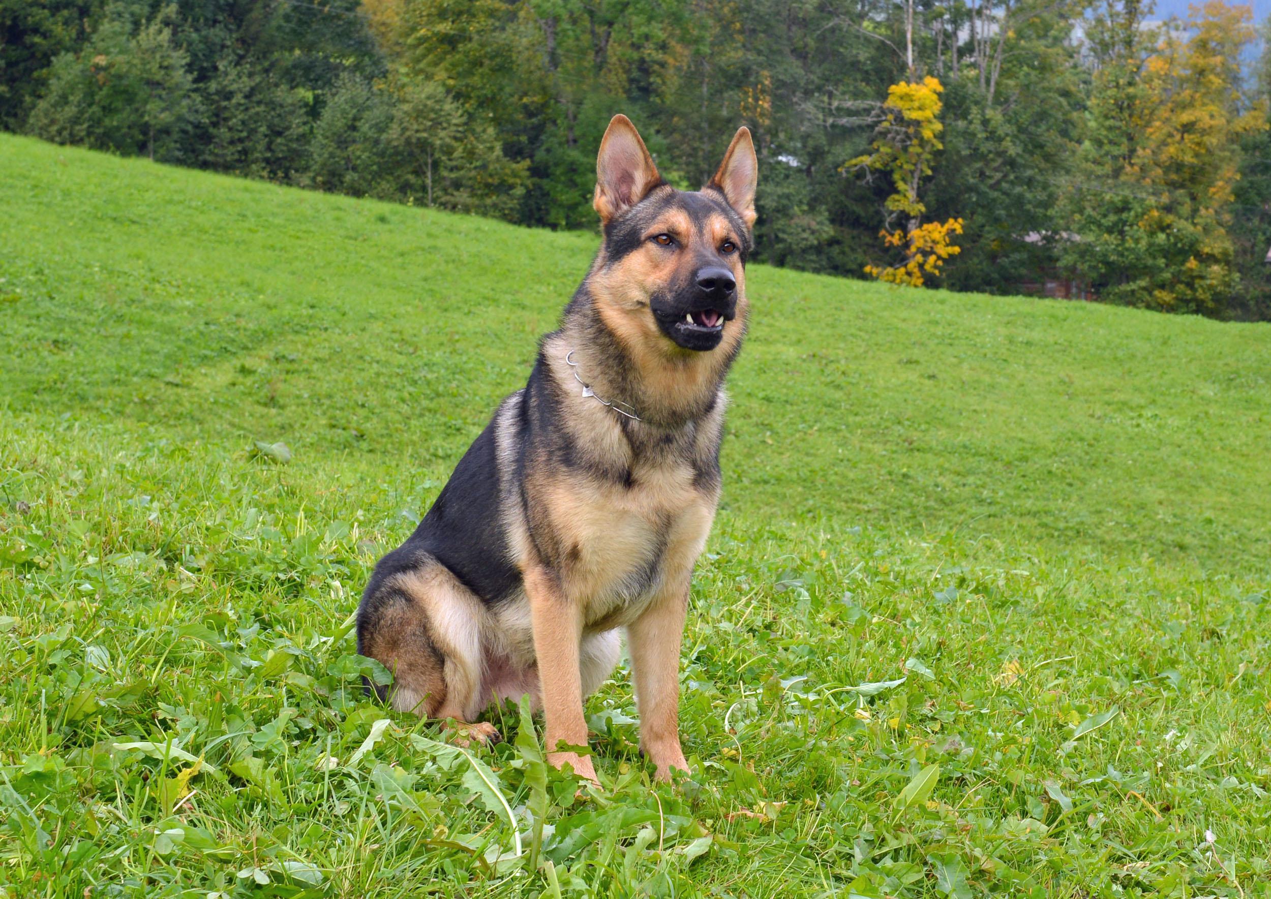 Reiden: Polizeihund findet alkoholisierten Vandalen