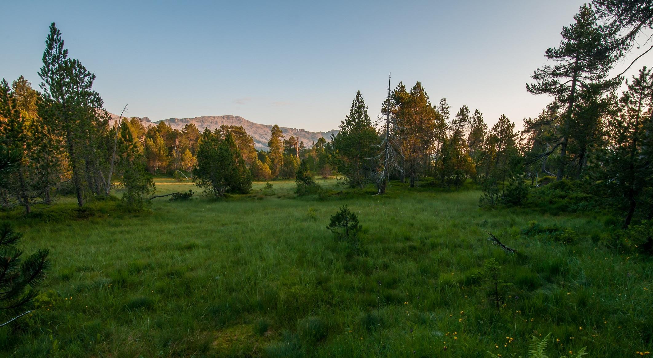 Hochmoor «Gross Gfäl» in der Gemeinde Flühli. Für wassergeprägte Lebensräume, wie dieses Moor, trägt der Kanton Luzern eine besondere Verantwortung.